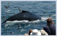 whalewatch4