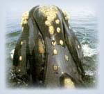 whalewatch6 2