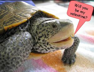Will you be my valentine?