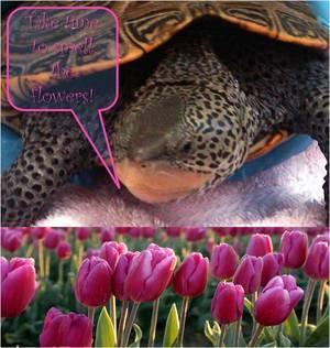 Join us for Spring Splash, Saturday, April 16!