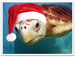 sea-turtle-santa-hat-BSU-2010